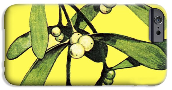 Wintry Drawings iPhone Cases - Mistletoe iPhone Case by English School