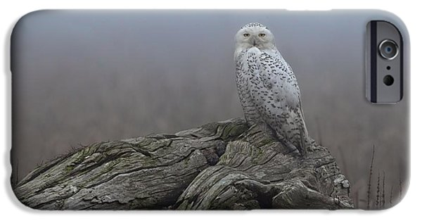 Snowy Pyrography iPhone Cases - Misty Morning Snowy Owl iPhone Case by Daniel Behm