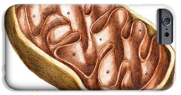 Atp Photographs iPhone Cases - Mitochondria iPhone Case by Spencer Sutton