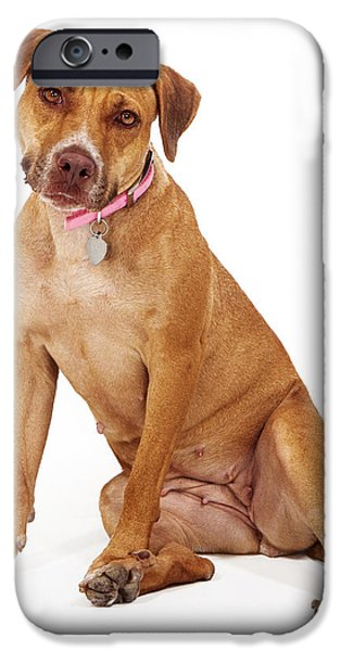 Mixed Breed Female Large Dog iPhone Case by Susan  Schmitz