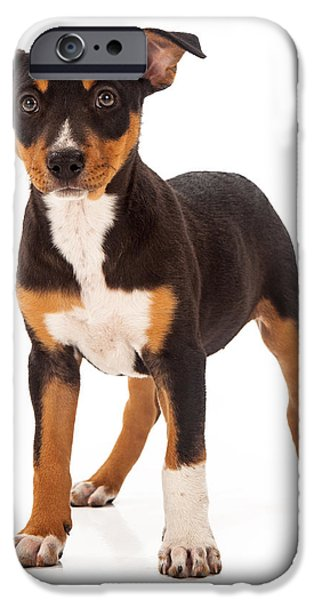 Mixed Breed iPhone Cases - Mixed Breed Puppy Ear Up iPhone Case by Susan  Schmitz