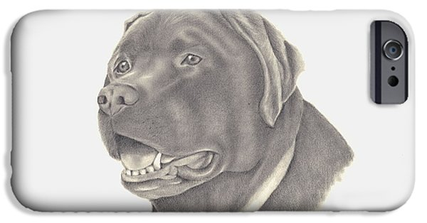 Chocolate Lab iPhone Cases - Mocha iPhone Case by Patricia Hiltz