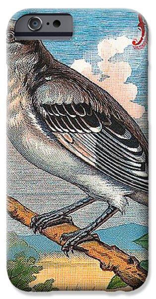 Mocking Bird iPhone Case by Studio Artist