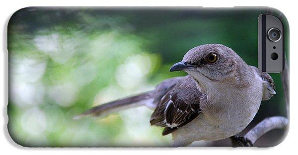 Birds iPhone Cases - Mocking U iPhone Case by Skip Willits