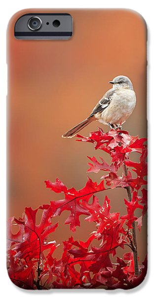 Mockingbird iPhone Cases - Mockingbird Autumn iPhone Case by Bill  Wakeley