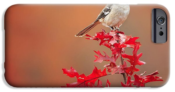 Minimalism iPhone Cases - Mockingbird Autumn Square iPhone Case by Bill  Wakeley