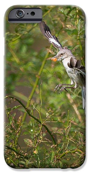 Mockingbird iPhone Cases - Mockingbird iPhone Case by Bill  Wakeley