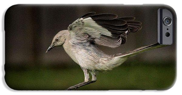Mockingbird iPhone Cases - Mockingbird No. 2 iPhone Case by Rick Barnard