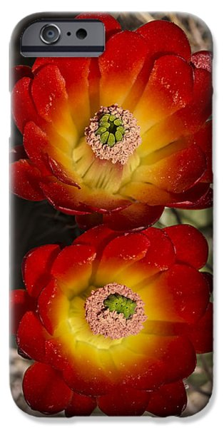 Mounds iPhone Cases - Mojave Mound Cactus 2 iPhone Case by Lee Kirchhevel