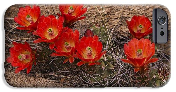 Cactus Southwest Cactus Flower Orange Wildflowers Nature Arizona iPhone Cases - Mojave Mound Cactus 3 iPhone Case by Lee Kirchhevel