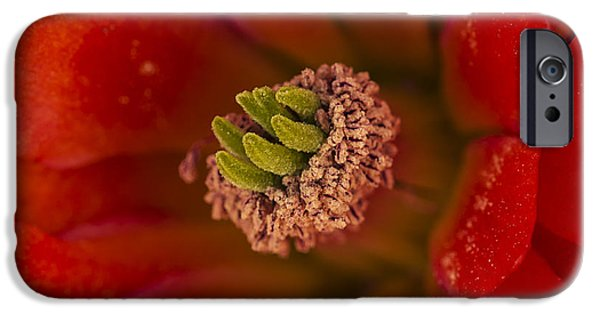 Cactus Southwest Cactus Flower Orange Wildflowers Nature Arizona iPhone Cases - Mojave Mound Cactus Closeup iPhone Case by Lee Kirchhevel