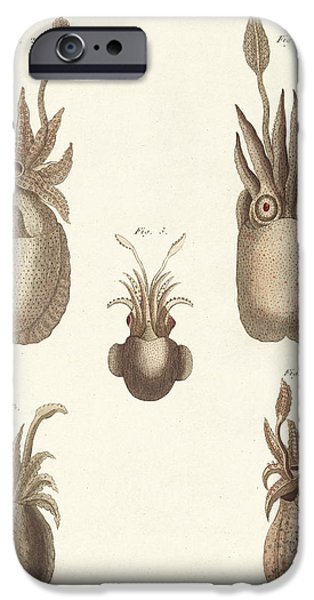 Animal Drawings iPhone Cases - Molluscs or soft worms iPhone Case by German School