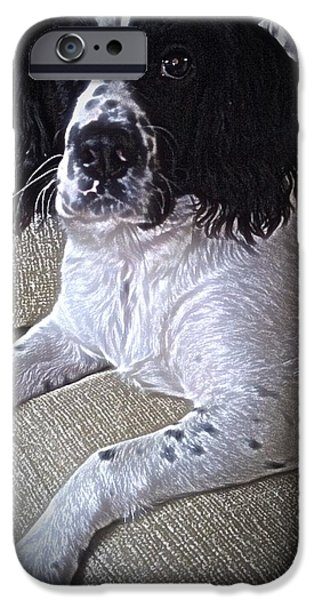Dogs Pyrography iPhone Cases - Molly the Springer  iPhone Case by Robert Carter