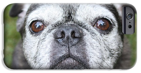 Black Dog iPhone Cases - Mollys Mug Shot iPhone Case by John Telfer