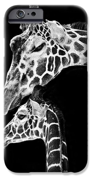 Nature Study iPhone Cases - Mom and Baby Giraffe  iPhone Case by Adam Romanowicz