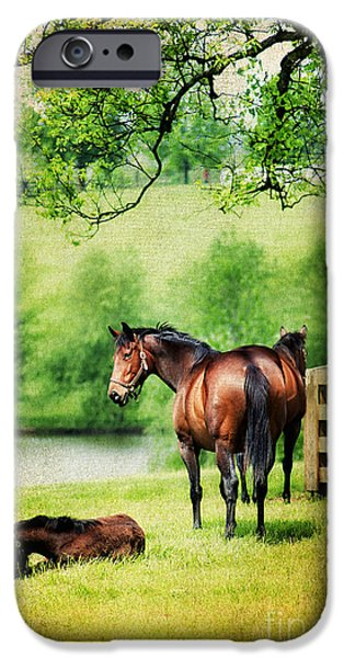 Mom and Foal iPhone Case by Darren Fisher