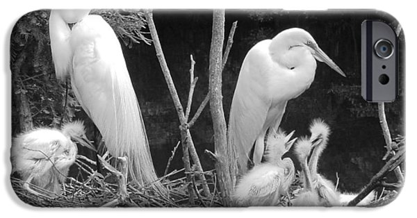 Baby Bird iPhone Cases - Mom and Pop and Chicks in black and White iPhone Case by Suzanne Gaff