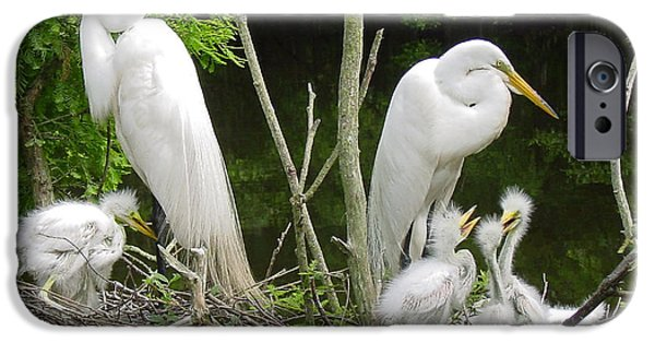 Baby Bird iPhone Cases - Mom and Pop and Chicks iPhone Case by Suzanne Gaff