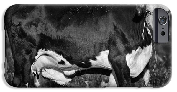 Caring Mother iPhone Cases - Momma Cow iPhone Case by Patrick M Lynch
