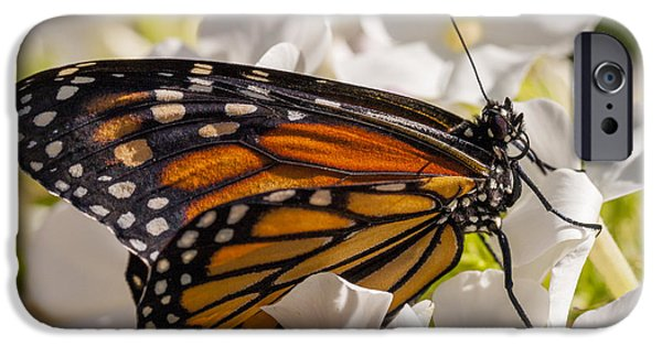 Close Up Floral iPhone Cases - Monarch Butterfly iPhone Case by Adam Romanowicz