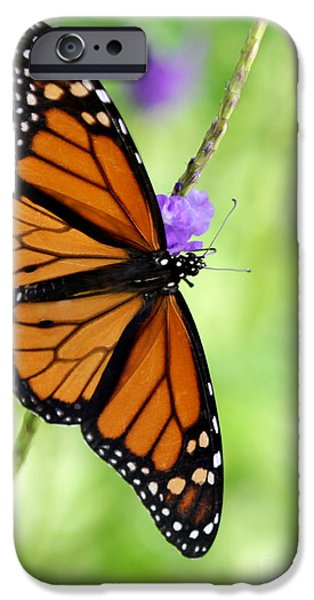 Florida Flowers Photographs iPhone Cases - Monarch Butterfly in Spring iPhone Case by Sabrina L Ryan