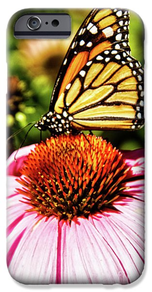Haybale iPhone Cases - Swallowtail Butterfly iPhone Case by Robert Bales