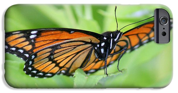 Insects iPhone Cases - Monarch Butterfly Rocking Chair iPhone Case by Neal  Eslinger