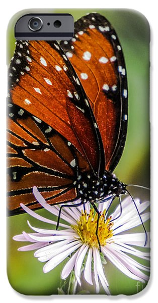 Floral Photographs iPhone Cases - Monarch butterfly iPhone Case by Zina Stromberg