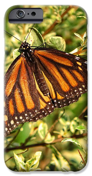 Miracle iPhone Cases - Monarch In The Journey iPhone Case by Ella Kaye Dickey