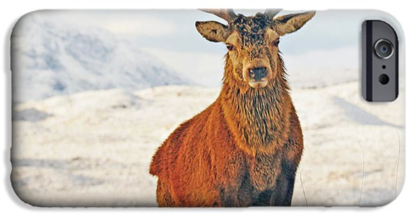Highlands Digital iPhone Cases - Monarch of the Glen iPhone Case by Pat Speirs