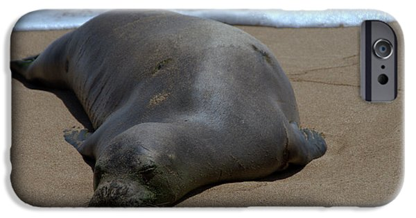 Sea Lions iPhone Cases - Monk Seal Sunning iPhone Case by Brian Harig