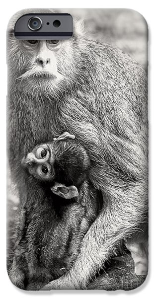 Nurture iPhone Cases - Monkeys iPhone Case by HD Connelly