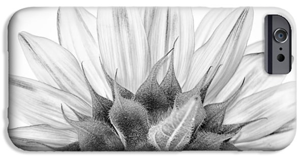 Close Up Floral iPhone Cases - Monochrome Sunflower iPhone Case by Stylianos Kleanthous
