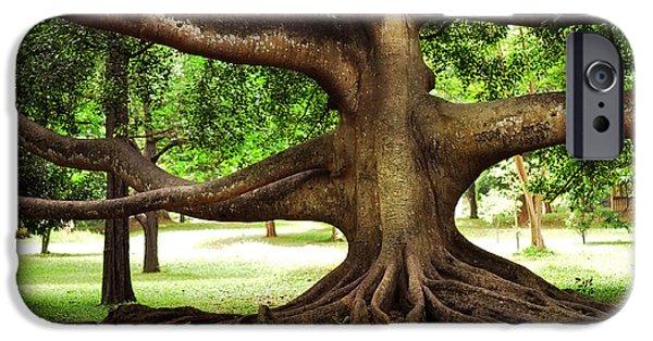 Tree Roots Photographs iPhone Cases - Monster Tree. Old Fig Tree in Peradeniya Garden. Sri Lanka iPhone Case by Jenny Rainbow