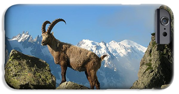 Recently Sold -  - Snow iPhone Cases - Mont Blanc Mountain Goat iPhone Case by Mountain Dreams