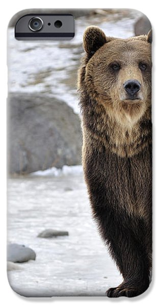 Montana Grizzly  iPhone Case by Fran Riley