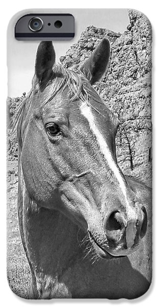 Montana Horse Portrait in Black and White iPhone Case by Jennie Marie Schell