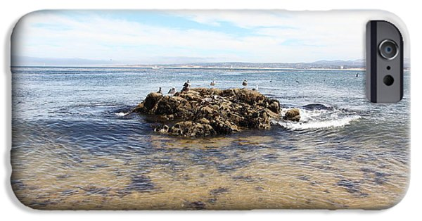 Seagull iPhone Cases - Monterey Bay California 5D25055 iPhone Case by Wingsdomain Art and Photography