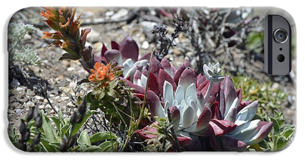 Point Lobos State iPhone Cases - Monterey Indian Paintbrush and Ice Plant iPhone Case by Bruce Gourley