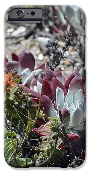 Monterey Indian Paintbrush and Ice Plant iPhone Case by Bruce Gourley