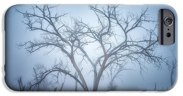 Tree Art Print iPhone Cases - Moods of the Morning iPhone Case by Darren  White