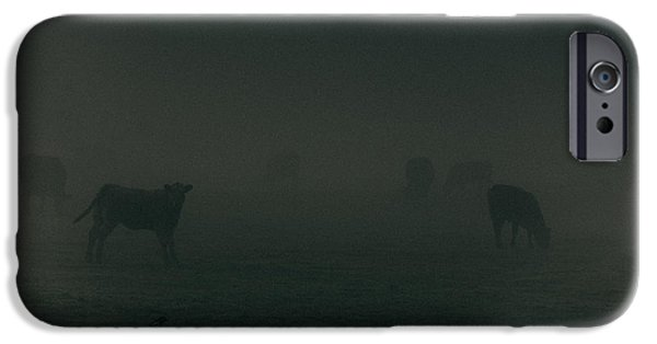 Agricultural iPhone Cases - Mooing in the mist iPhone Case by Chris Fletcher