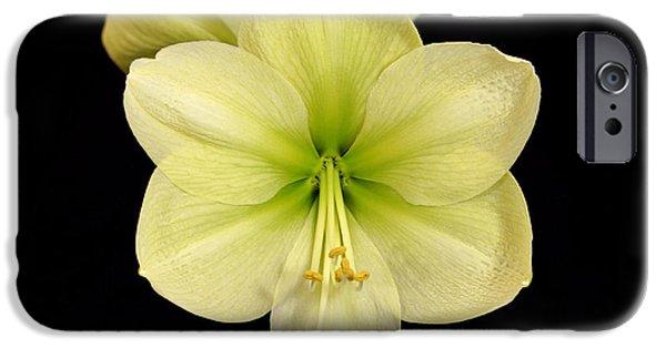 Indiana Flowers iPhone Cases - Moonlight Amaryllis iPhone Case by Sandy Keeton