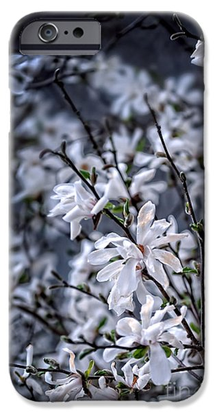 Moonlit iPhone Cases - Moonlit Blossoms iPhone Case by HD Connelly