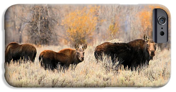 Wild Animals iPhone Cases - Moose iPhone Case by Donna Kennedy