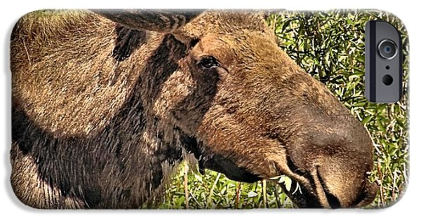 Bull Moose iPhone Cases - Moose Head iPhone Case by Dan Sproul