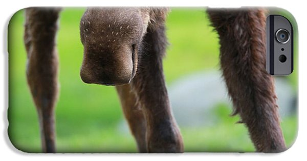Moose In Water iPhone Cases - Moose Nose iPhone Case by Dan Sproul