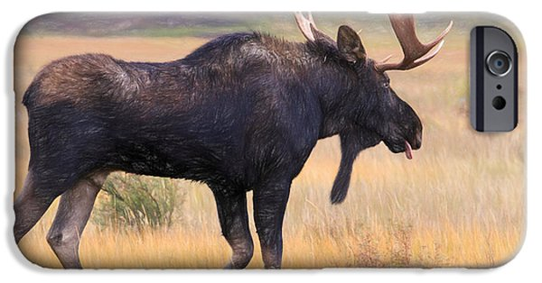 Bull Moose iPhone Cases - Moose on the Loose iPhone Case by Donna Kennedy