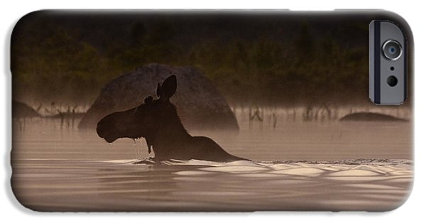 Photography Photographs iPhone Cases - Moose Swim iPhone Case by Brent L Ander