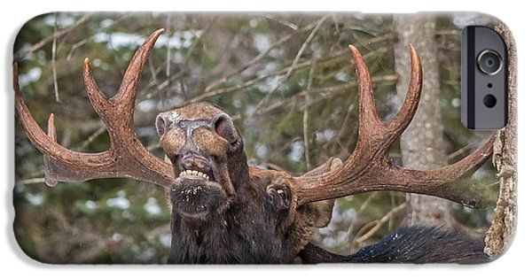 Mooses Tooth iPhone Cases - Moose Teeth iPhone Case by Steve Dunsford